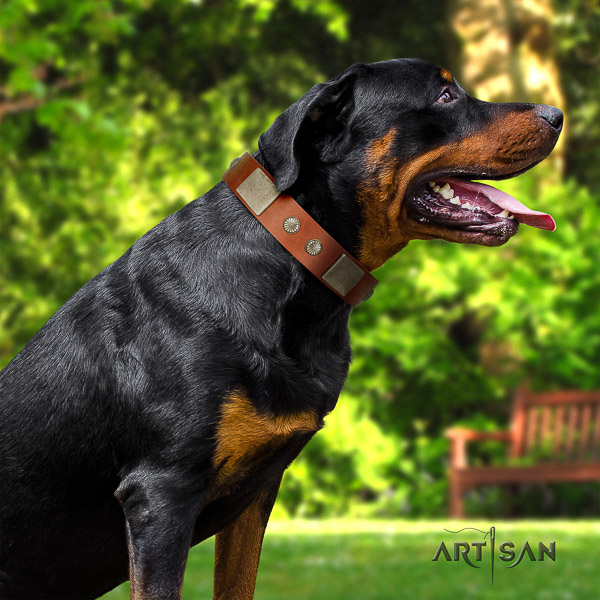 Rottweiler basic training leather collar for your attractive doggie