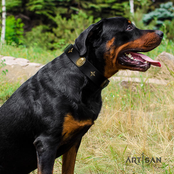 Rottweiler stylish walking full grain leather collar for your lovely four-legged friend