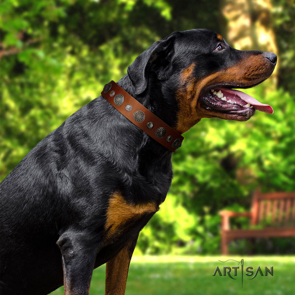 Rottweiler adjustable collar with top notch adornments for your canine