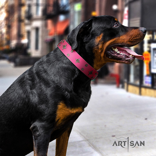 Rottweiler stylish walking full grain leather collar for your impressive doggie
