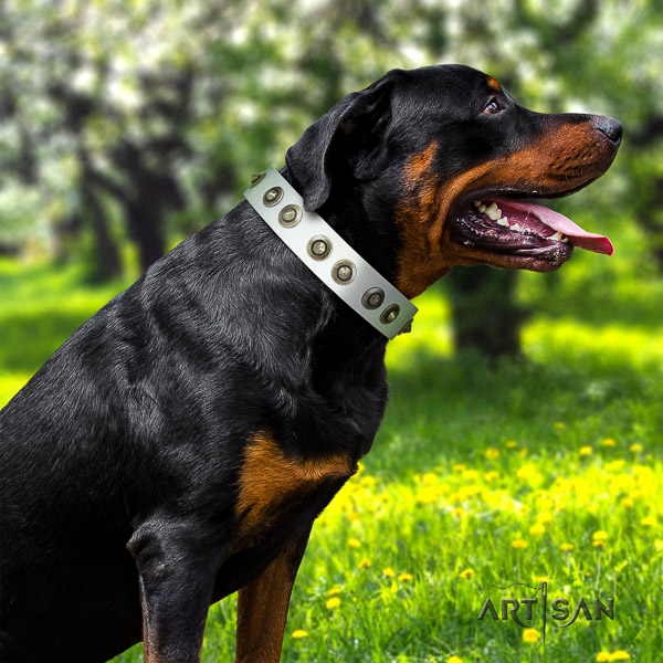 Rottweiler everyday walking natural leather collar for your handsome dog
