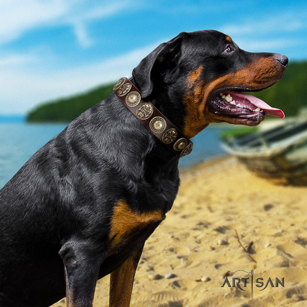 Rottweiler comfy wearing genuine leather collar for your handsome pet