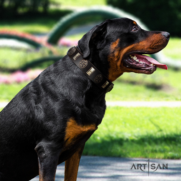 Rottweiler comfy wearing full grain natural leather collar for your lovely doggie