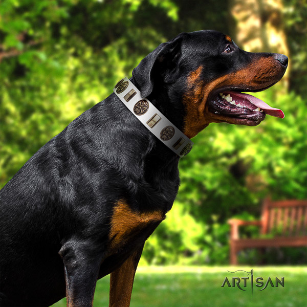 Rottweiler basic training natural leather collar for your handsome dog