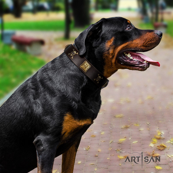 Rottweiler basic training leather collar for your handsome dog