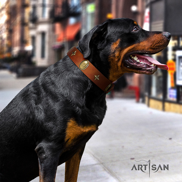 Rottweiler daily use leather collar for your handsome pet