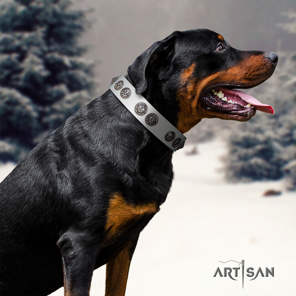 Rottweiler comfortable wearing leather collar for your beautiful pet