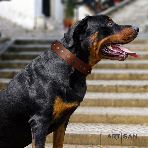 Rottweiler easy adjustable collar with awesome studs for your dog