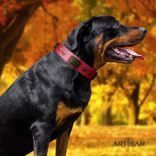 Rottweiler easy to adjust collar with incredible adornments for your pet