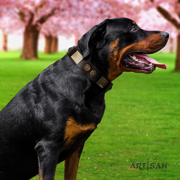 Rottweiler daily use natural leather collar for your beautiful dog