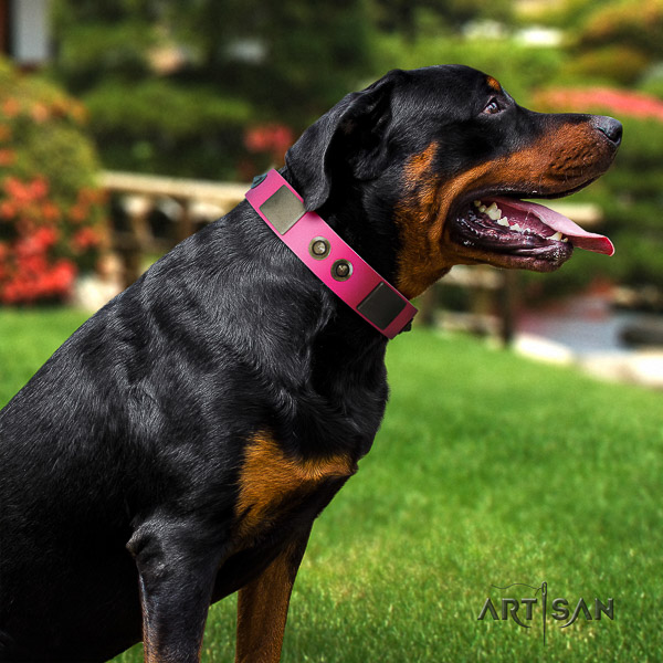 Rottweiler daily walking natural leather collar for your stylish pet