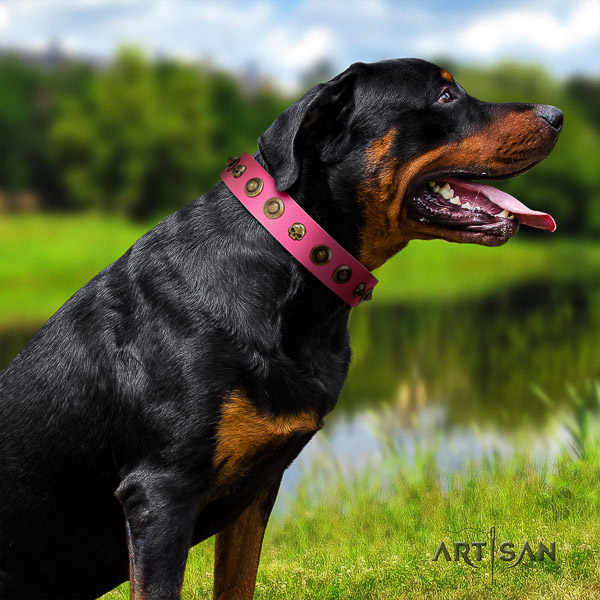 Rottweiler fancy walking full grain natural leather collar for your lovely dog