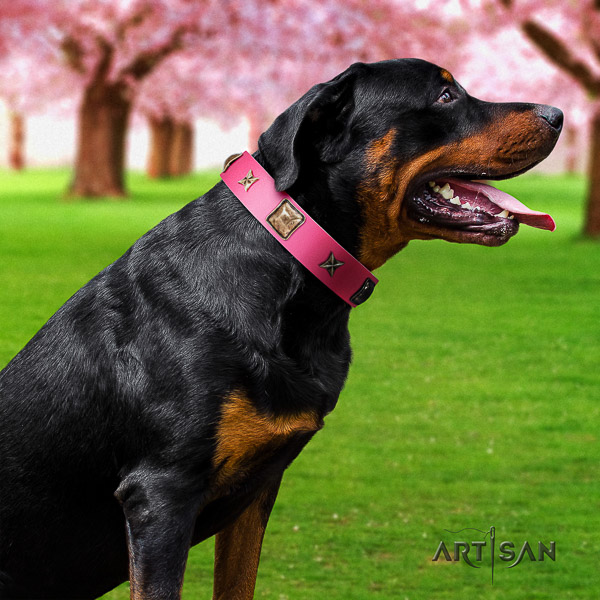 Rottweiler walking full grain genuine leather collar for your stylish doggie
