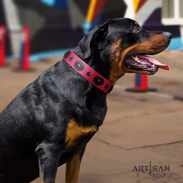 Rottweiler convenient collar with unusual embellishments for your pet