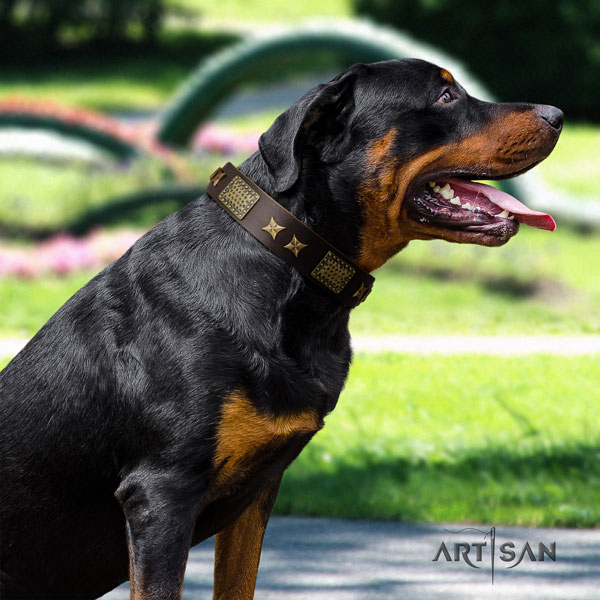 Rottweiler handmade collar with stylish adornments for your four-legged friend
