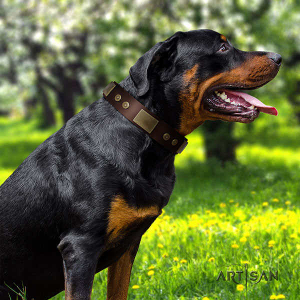 Rottweiler top quality collar with impressive adornments for your dog