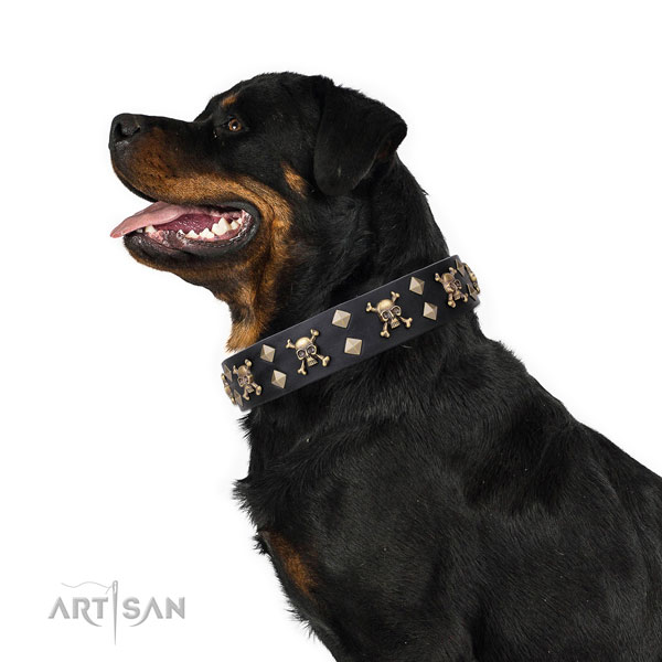 Rottweiler comfortable full grain leather dog collar for comfy wearing