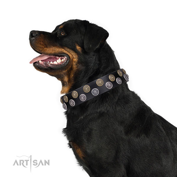 Rottweiler impressive leather dog collar for everyday walking