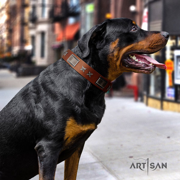 Rottweiler best quality collar with unusual embellishments for your pet