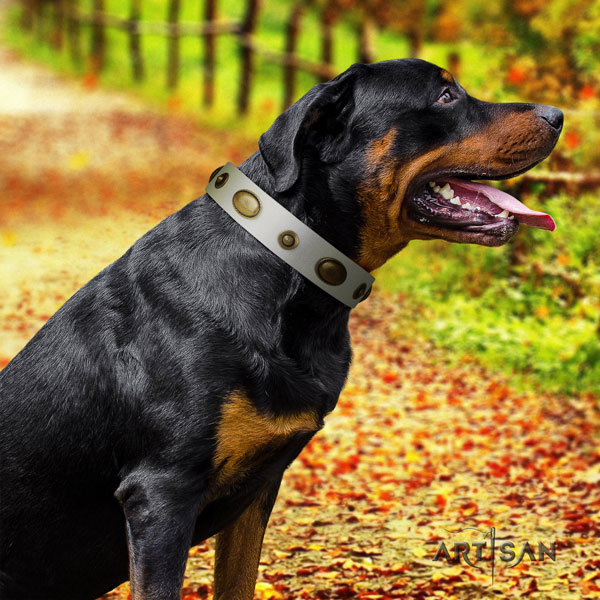 Rottweiler handcrafted collar with exceptional studs for your doggie