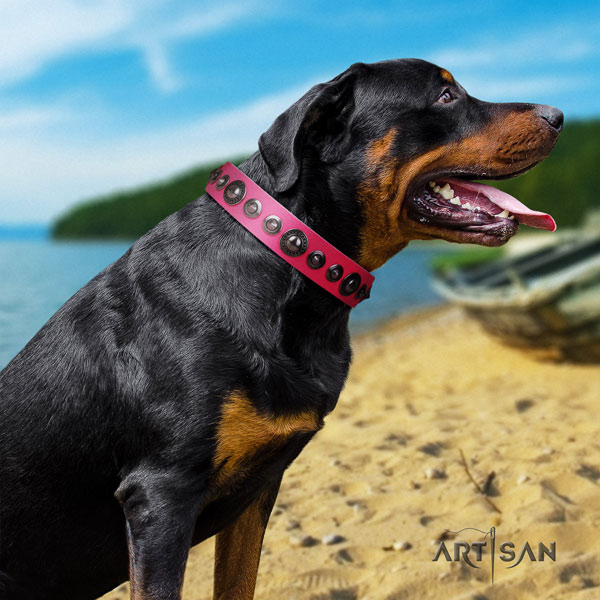 Rottweiler best quality collar with incredible adornments for your dog
