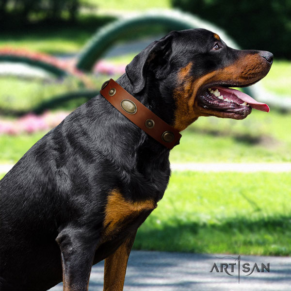 Rottweiler handmade collar with inimitable embellishments for your dog