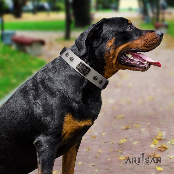 Rottweiler best quality collar with significant embellishments for your canine