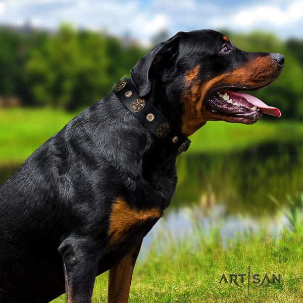 Rottweiler daily walking natural leather collar for your handsome four-legged friend