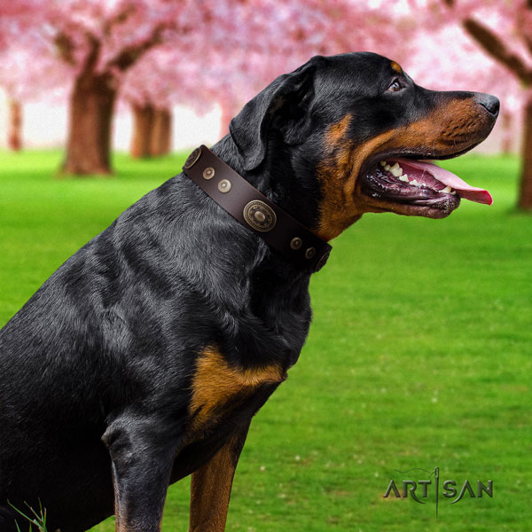 Rottweiler best quality collar with stylish studs for your pet
