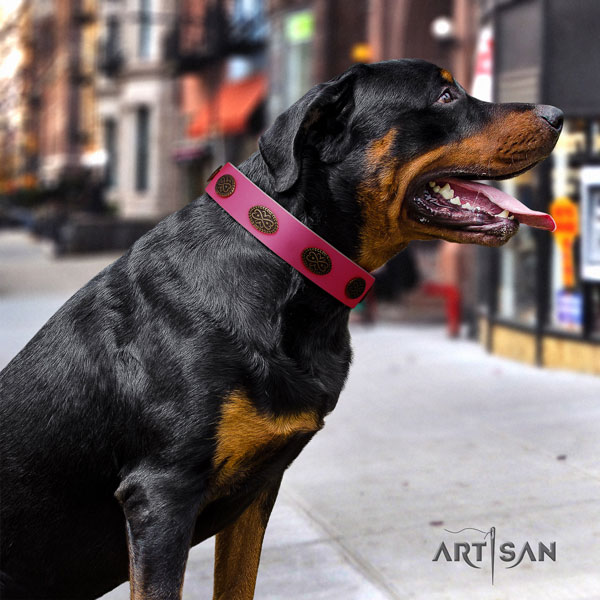 Rottweiler top quality collar with stunning studs for your doggie