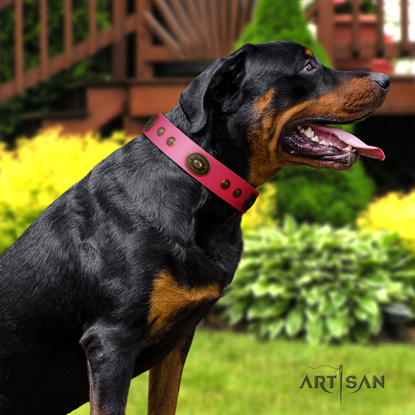 Rottweiler adjustable collar with amazing studs for your canine