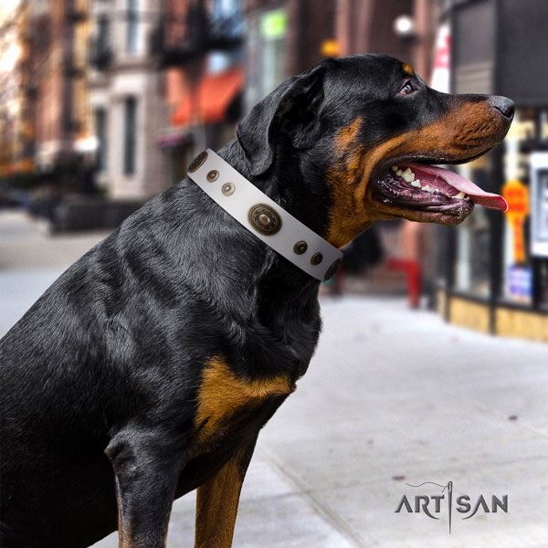 Rottweiler handcrafted collar with remarkable adornments for your four-legged friend
