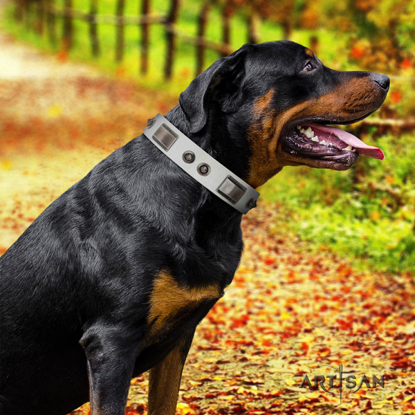Rottweiler top quality collar with trendy adornments for your four-legged friend