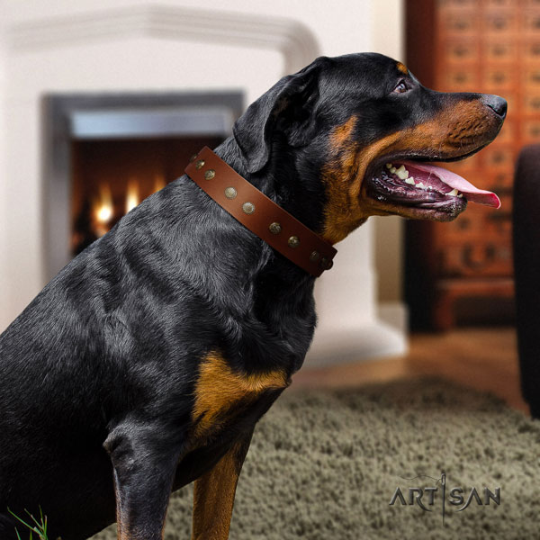 Rottweiler fine quality collar with extraordinary studs for your dog