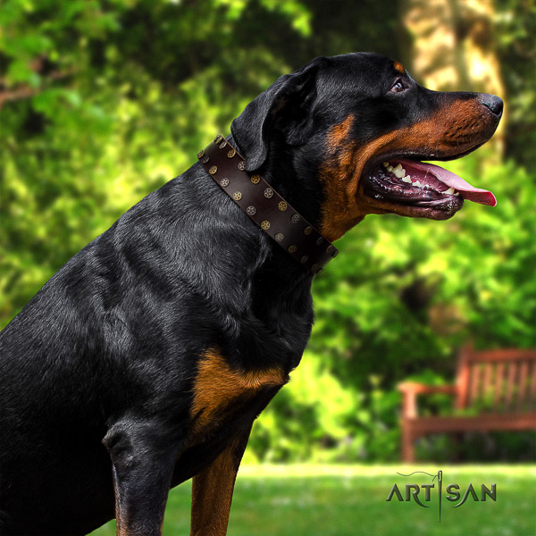 Rottweiler everyday walking leather collar for your impressive doggie