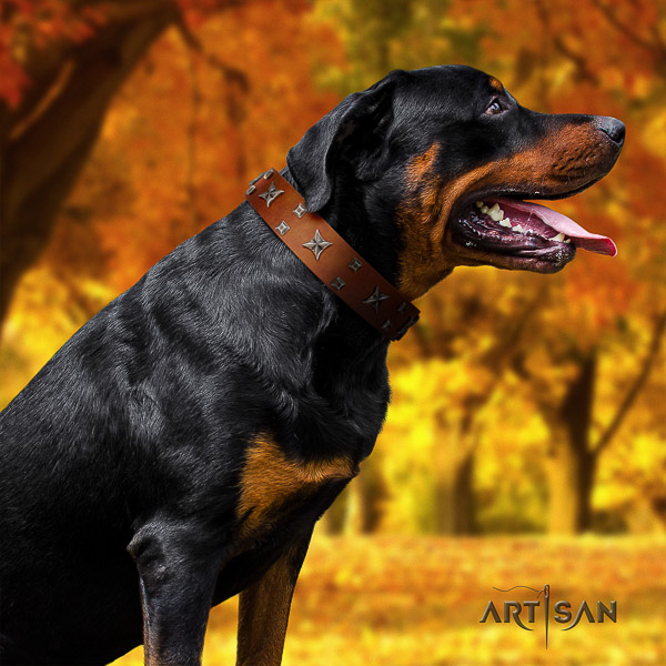 Rottweiler comfortable wearing natural leather collar for your lovely dog