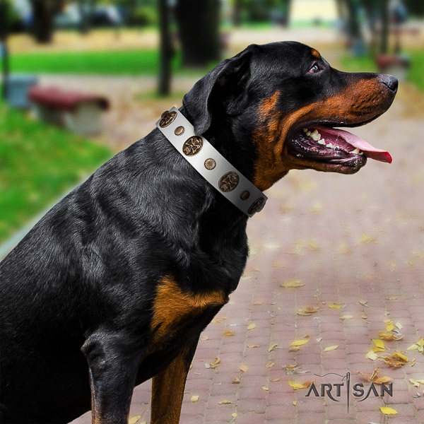 Rottweiler fancy walking genuine leather collar for your handsome dog