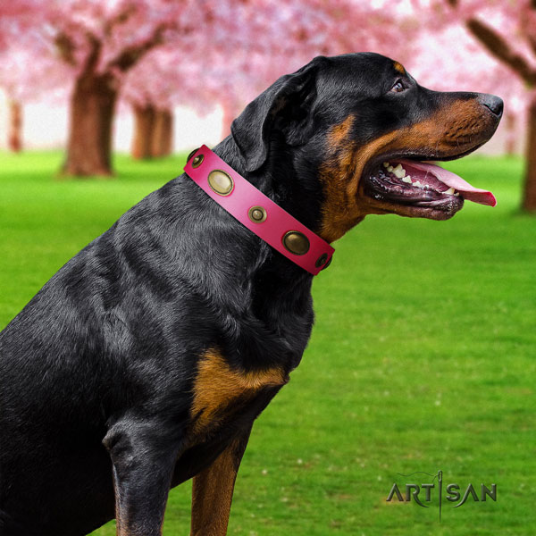 Rottweiler easy to adjust collar with amazing studs for your dog