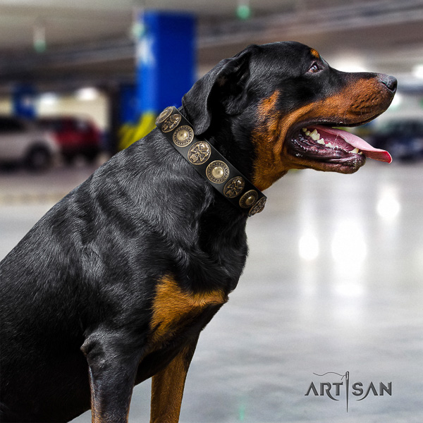 Rottweiler everyday use leather collar for your lovely four-legged friend