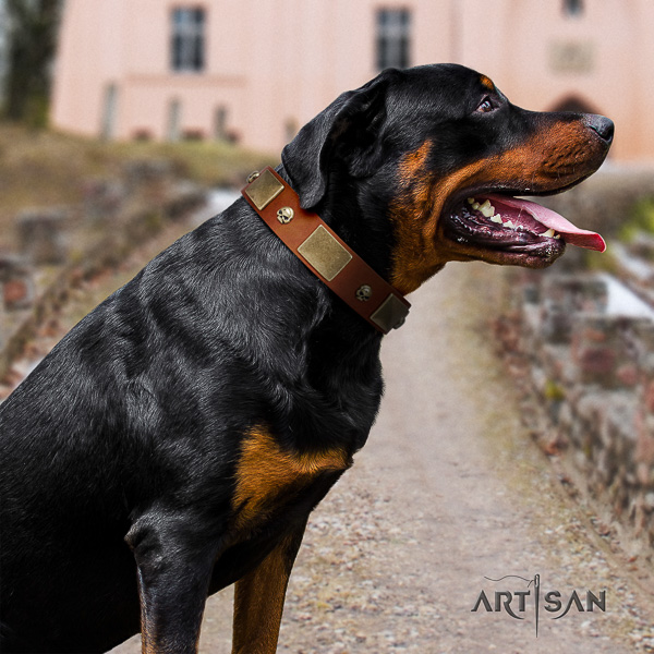 Rottweiler fancy walking full grain genuine leather collar for your handsome canine