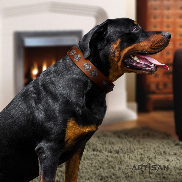 Rottweiler everyday walking full grain genuine leather collar for your impressive dog