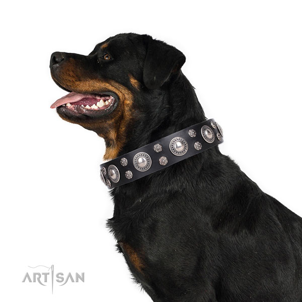Rottweiler handmade full grain natural leather dog collar for daily walking