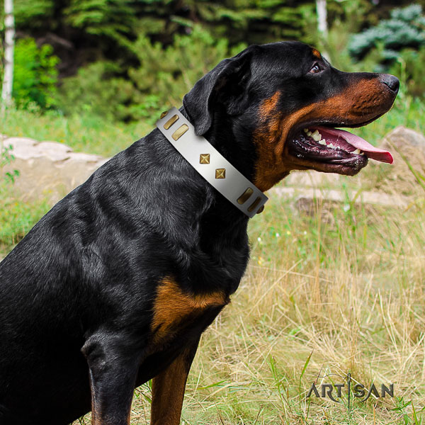 Rottweiler everyday walking leather collar for your lovely pet