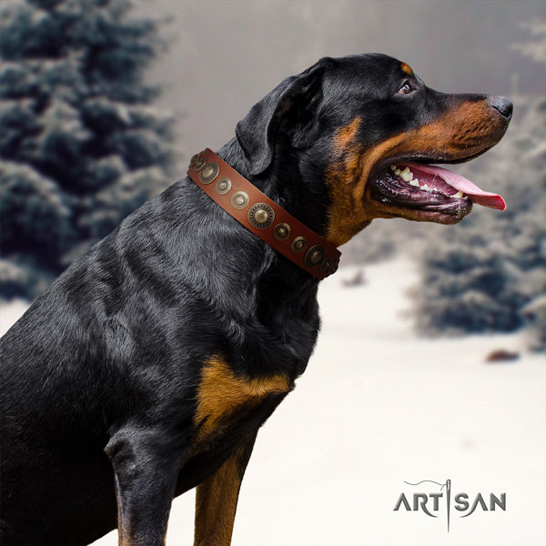 Rottweiler easy adjustable collar with incredible studs for your canine