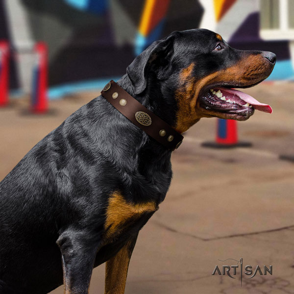 Rottweiler easy wearing collar with inimitable adornments for your doggie