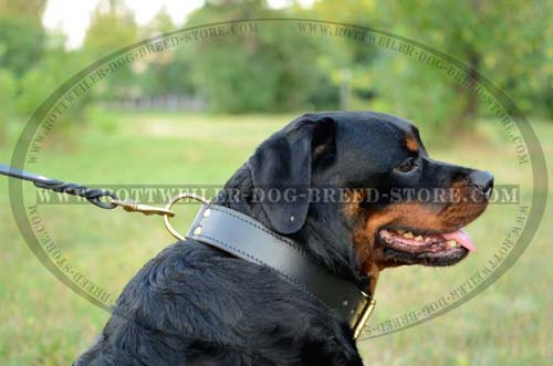 Handmade Leather Dog Collar is Ideal for Training/Walking