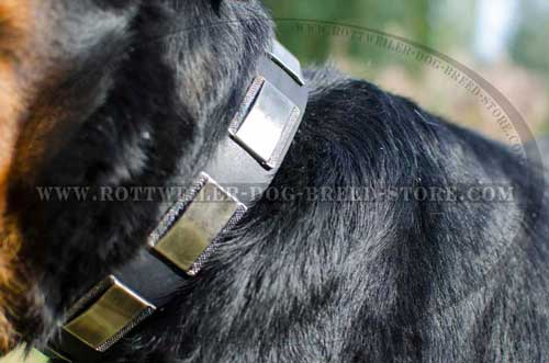 New Leather Dog Collar for Rottweilers' Stylish Walks