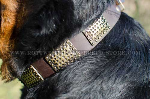 Stylish Leather Dog Collar for Rottweilers with Plates