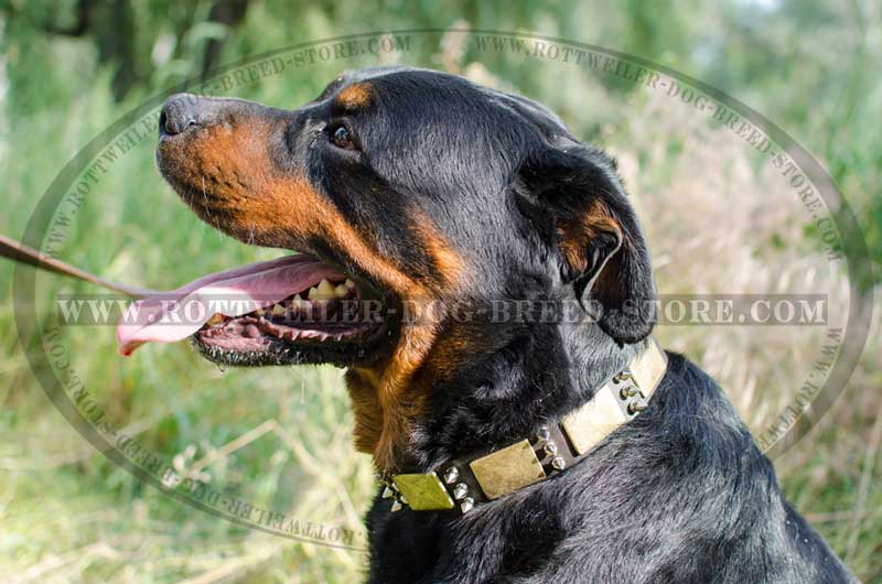 Designer Leather Collars Buy Rottweiler Collar Decor