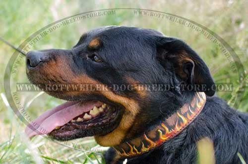 Hand Painted Canine Collar for Rottweilers